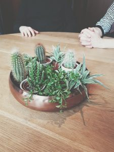 assortment of cactus plants on table near two people