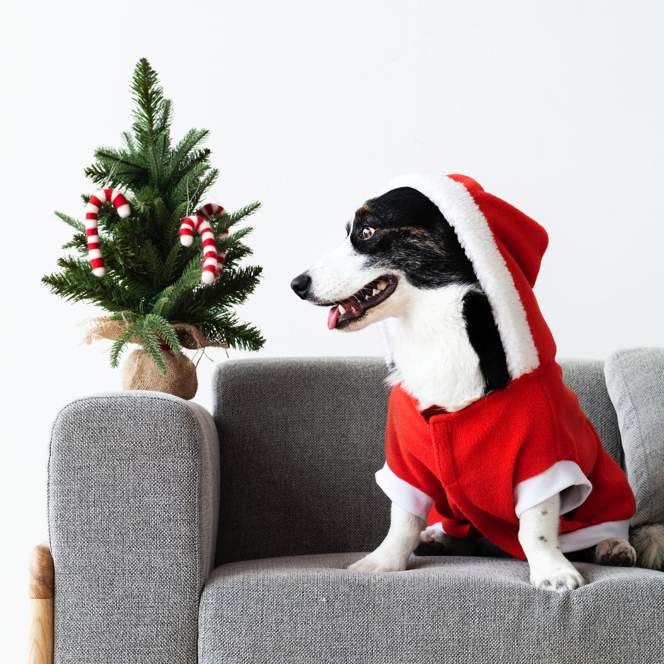 Pet-Proofing Your Apartment for the Holidays
