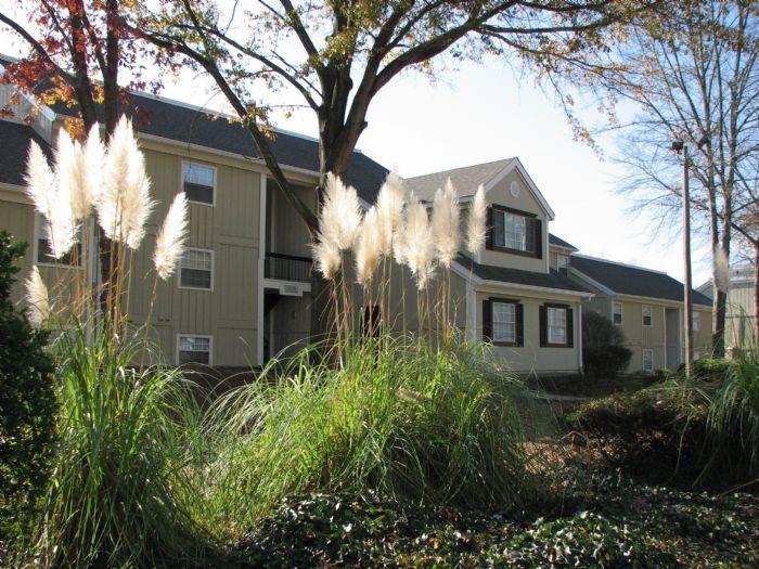 Domain At Cedar Creek Apartments